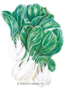 bok-choy-toy-choy-seeds
