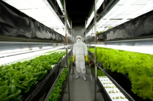indoor-hydroponics-gardening
