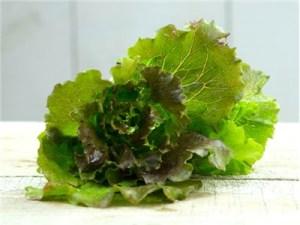 greens-lettuce-rouge-grenobloise-img_0312-002